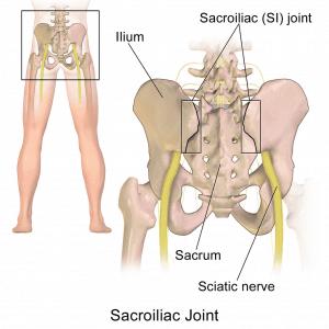 articolazione sacroiliaca