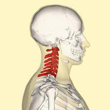 colonna cervicale